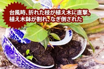 植木鉢が割れ、なぎ倒された