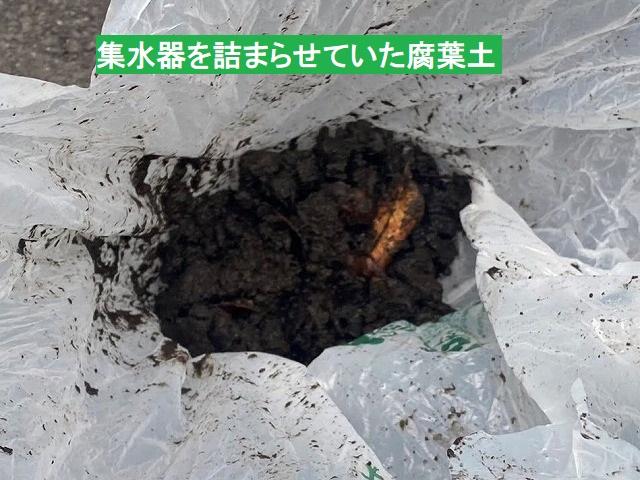 集水器を詰まらせていた腐葉土