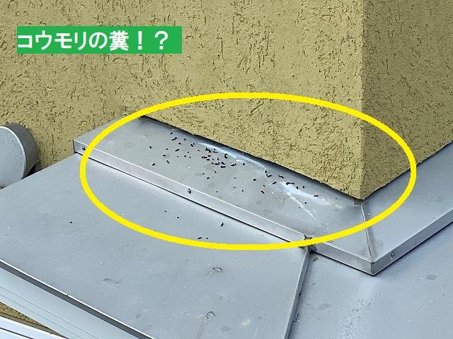 壁の隙間近くに落ちているコウモリの糞らしき物