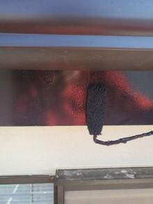 ひたちなか市のO様邸の破風板に茶色の塗料をローラーで塗布