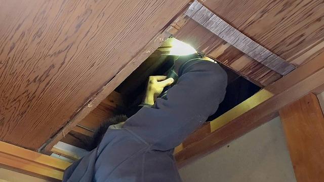天井に体を入れ水漏れ箇所の調査