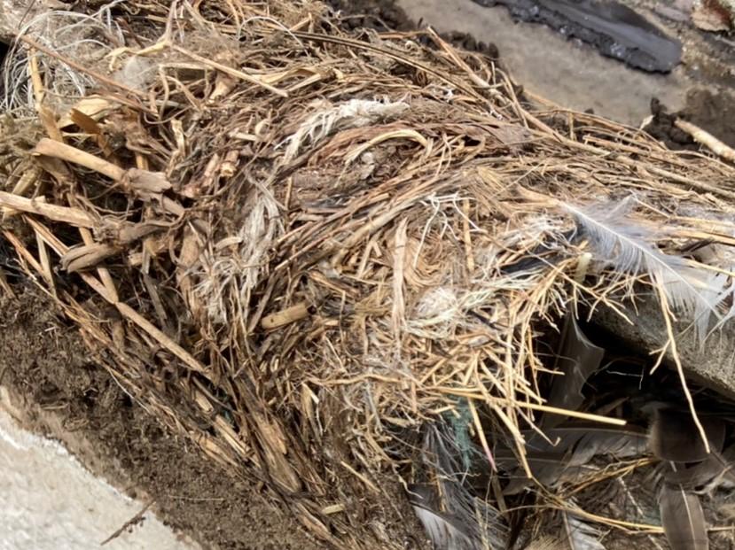 ケラバ瓦の下にあった鳥の巣