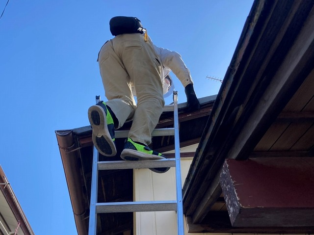ハシゴを掛け、地上から下屋根に登るスタッフ