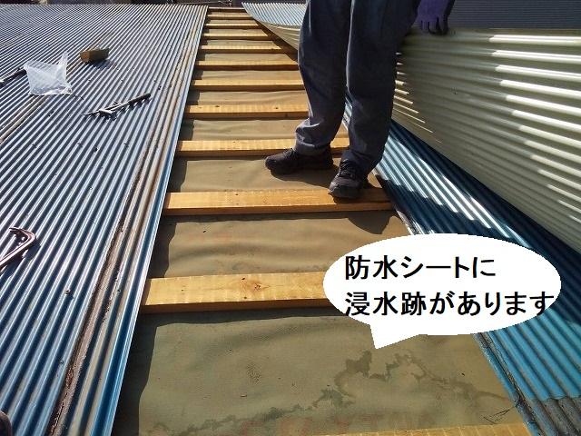 既存のトタン屋根を捲ると、防水シートに浸水痕が確認できる