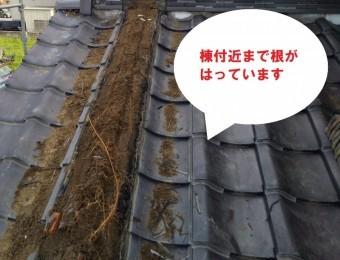 笠間市で化粧棟から木?隅棟から草?木の根が棟付近まで生えています