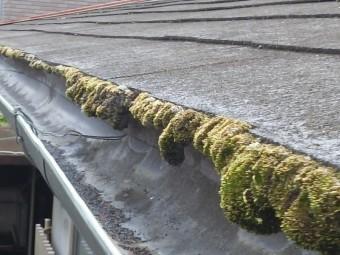 スレート屋根の軒先にビッシリ生えた苔