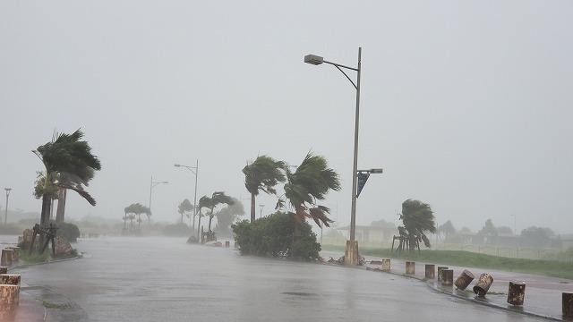 台風の影響で木々が薙ぎ倒されそうな風景