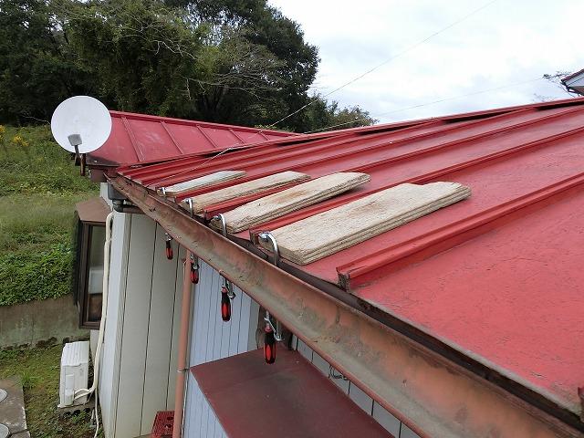 瓦棒屋根の軒先が強風で捲れたので万力で固定している