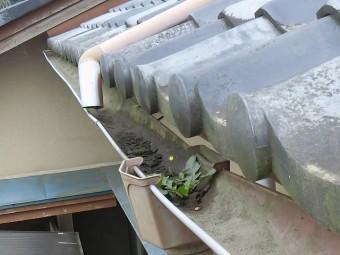 集水器に雑草が生え雨水が排出できない