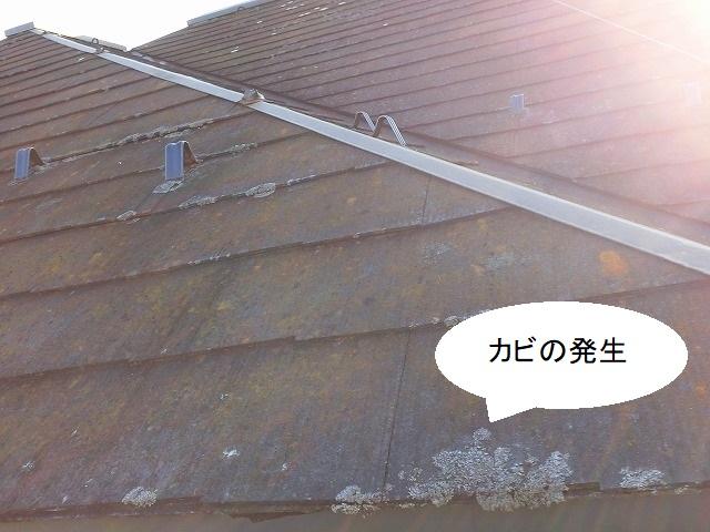 軒先を中心に白カビが発生している下妻市の現場屋根