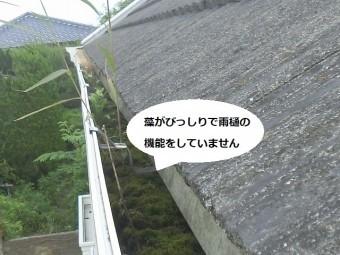 雨樋の中に苔がびっしり生えている