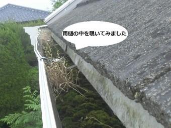 雨樋の中を覗くと大量の苔が流水を遮断しています