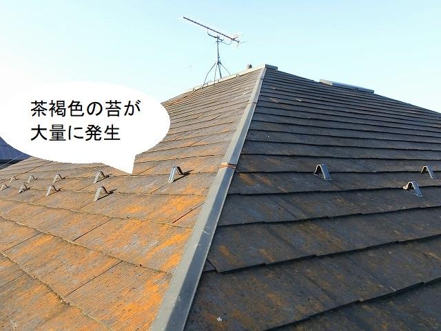 茶褐色の苔が大量に発生している下妻市の現場屋根