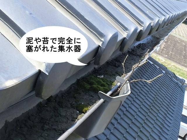 雨樋交換工事泥と苔で塞がれた集水器