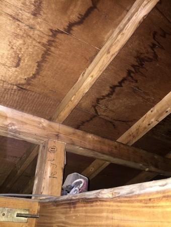 小屋裏からの調査で野地板に雨染みがあり垂木付近が中心と判明