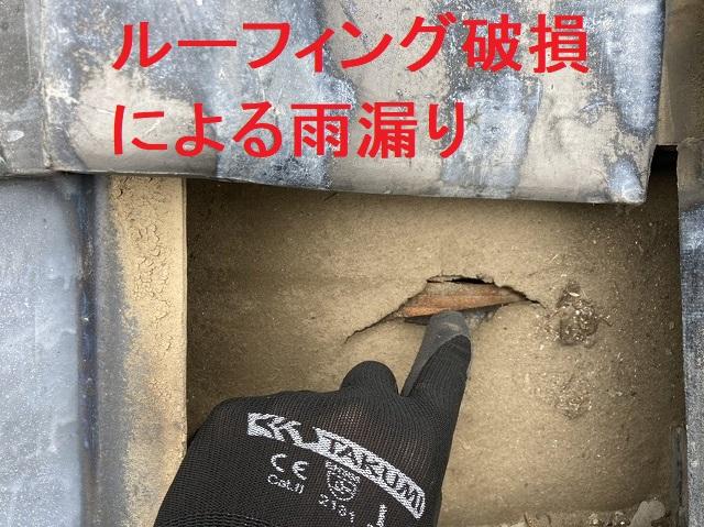 瓦屋根を捲り上げるとルーフィング破損があり雨漏りの発生箇所であると特定