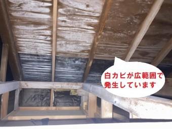 屋根全体に発生している白カビ