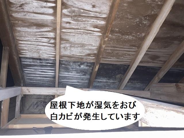 屋根下地である野地板に湿気が帯び、白カビも発生している