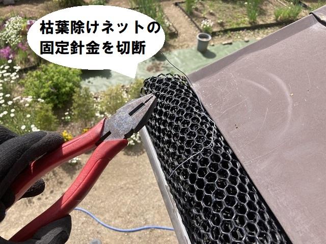 落ち葉除けネットの固定針金を、ペンチで切断する作業員