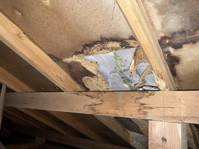 屋根裏から確認した野地板破損