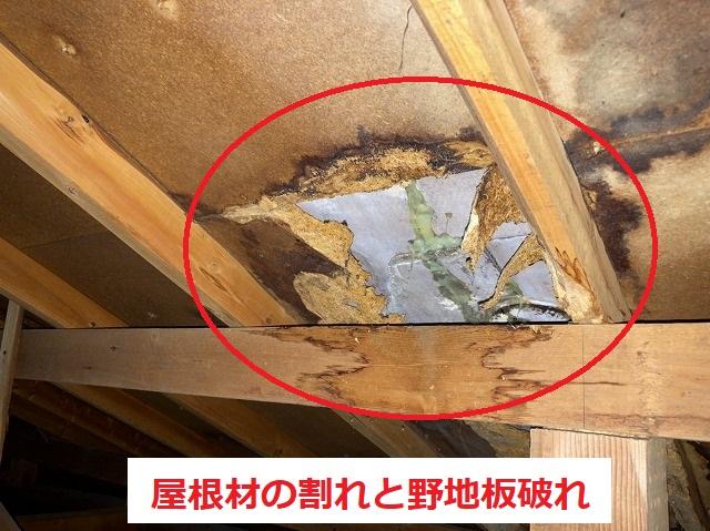 屋根の亀裂から雨漏りが発生しています