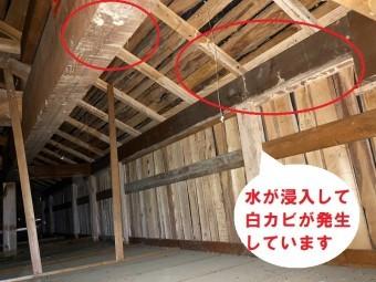 雨漏りは劣化した防水シートと瓦桟の雨塞き止めで屋根裏から調査で解った雨漏り箇所と白カビ