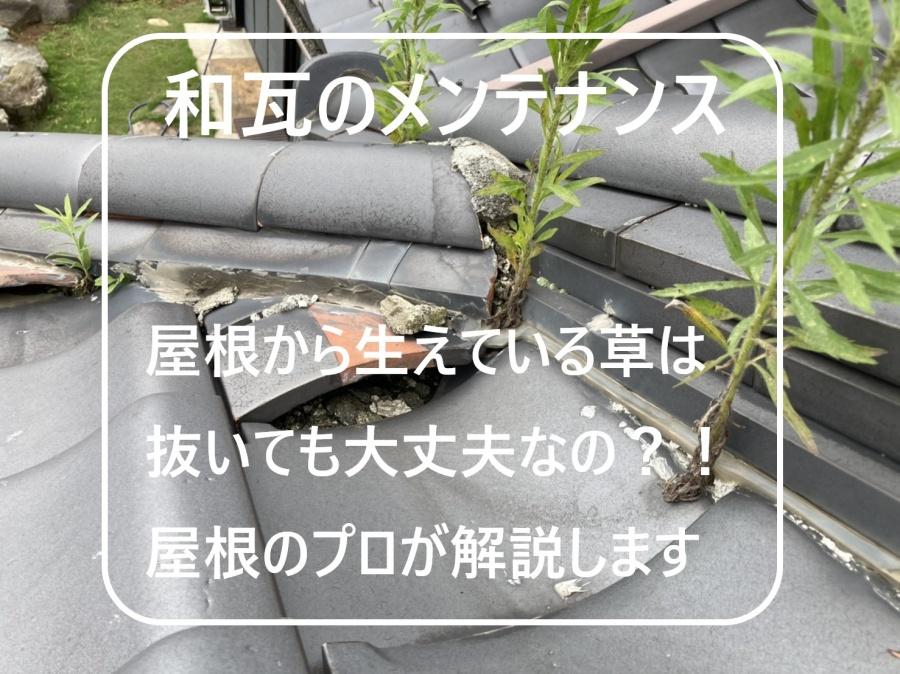 水戸市の化粧棟漆喰から生える草を抜くと棟崩れの恐れがあります