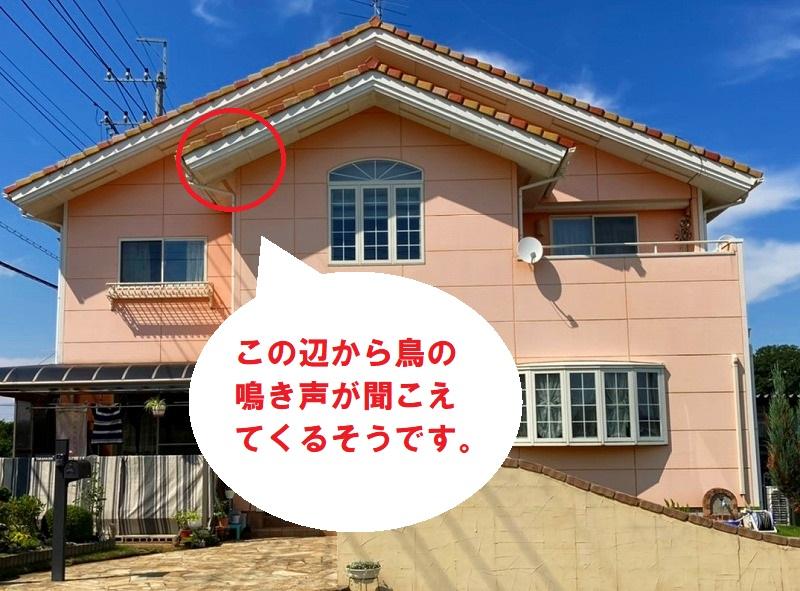 古河市のお客様は屋根に住み着いたスズメの声がうるさく睡眠を邪魔されています