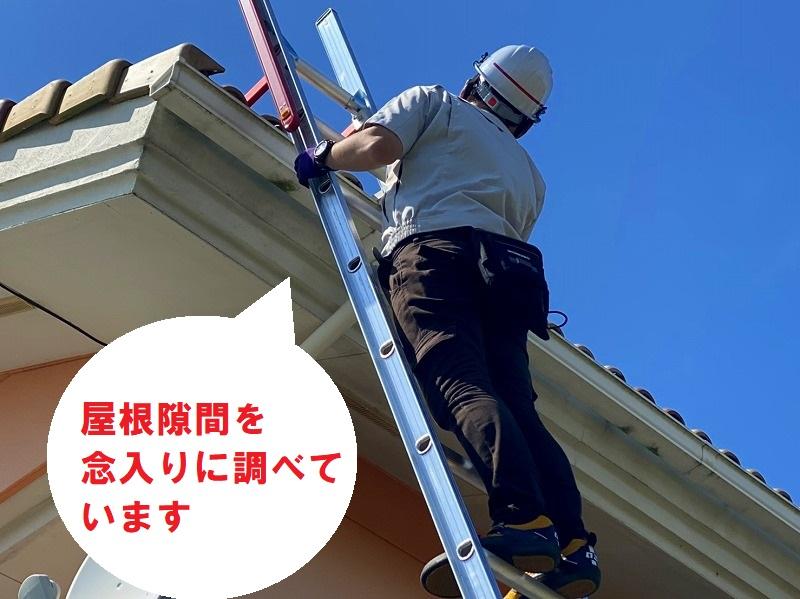古河市のお客様は屋根に住み着いたスズメの声がうるさいので、屋根の調査を梯子を使用し隅々まで調査いたします