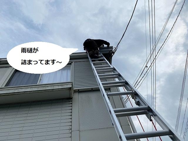 梯子に登るスタッフを地上から撮影