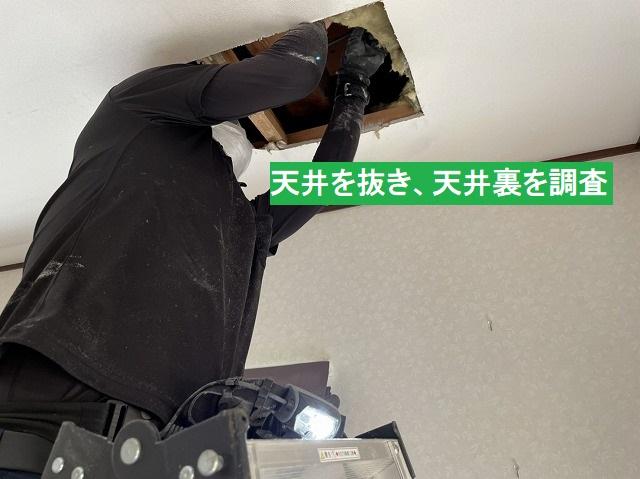 天井を部分的に抜くスタッフ