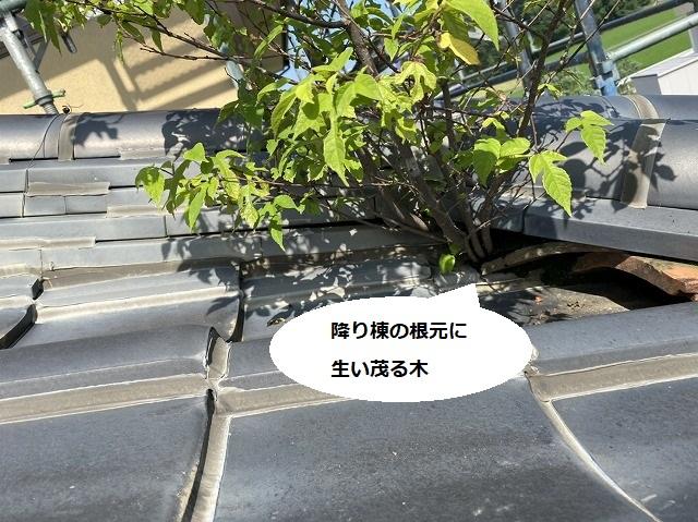 降り棟の根元に生い茂る木