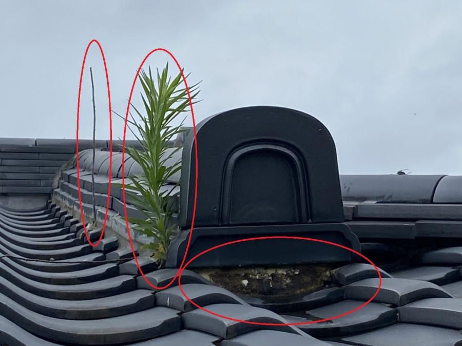 2階の化粧棟もラバーロックが原因で草が生えています