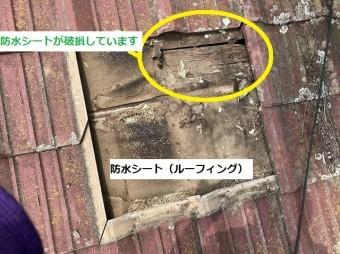 赤いセメント瓦を捲ると防水シートが破損していた