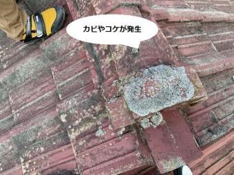 水戸市のセメント瓦に付着した大量のカビと苔