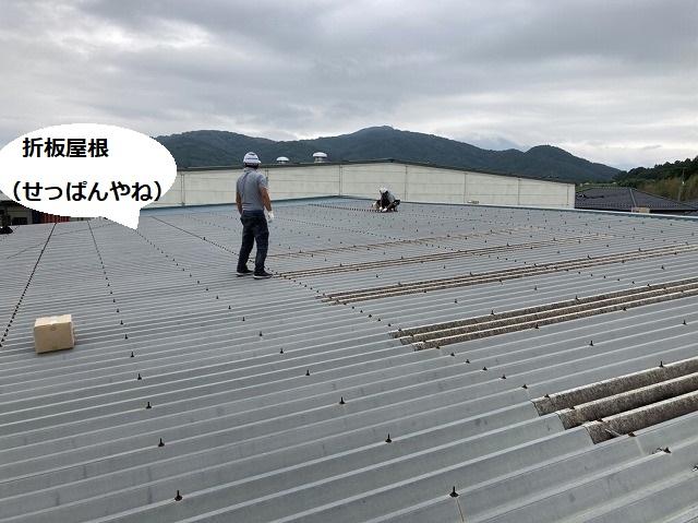とても大きな桜川市にある倉庫の折板屋根