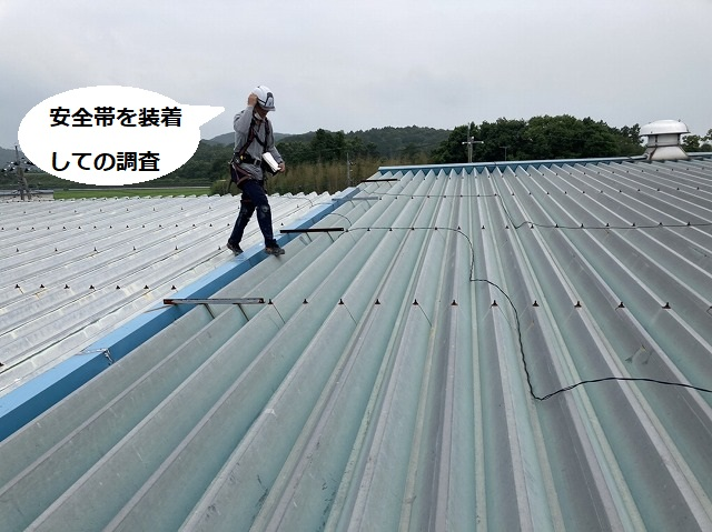 折板屋根の上を安全帯をして調査する屋根職人