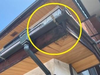 雨樋破損を放置した結果鼻隠しや軒天にまで被害が広がる