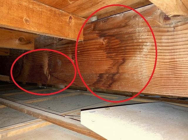 日立市の縦葺き屋根雨漏り調査時に発見された梁に付いた雨染み