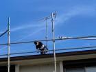 屋根上で作業する職人を地上から撮影