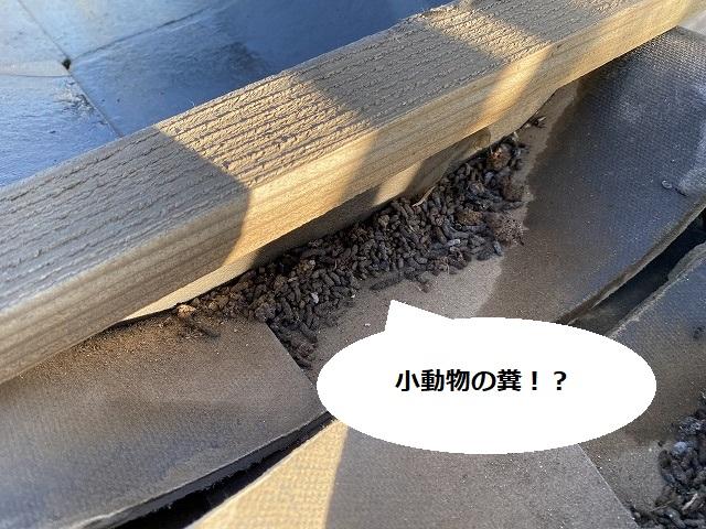 解体した棟部から小動物の糞
