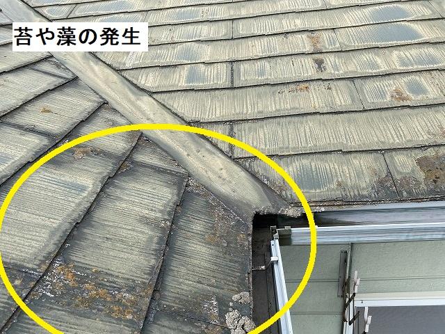塗膜が剥離し、藻や苔が発生している小美玉市のコロニアル屋根