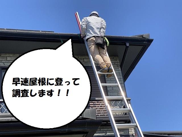 棟瓦調査のため、屋根に登るスタッフ