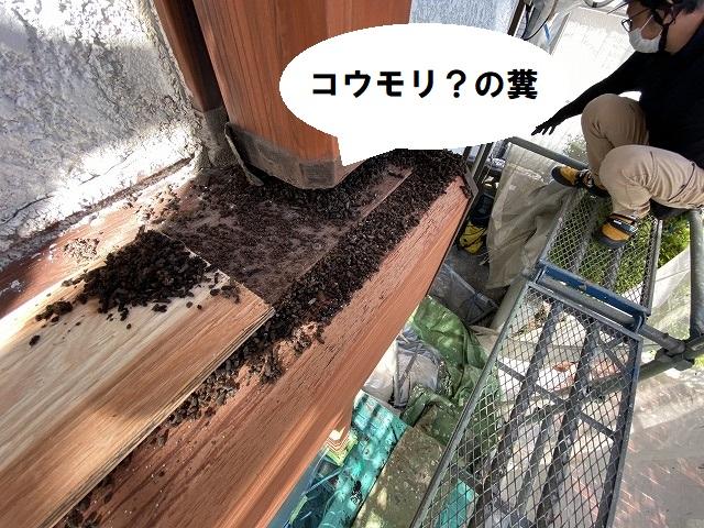 コウモリの糞らしき物が柱の下に沢山たまっている