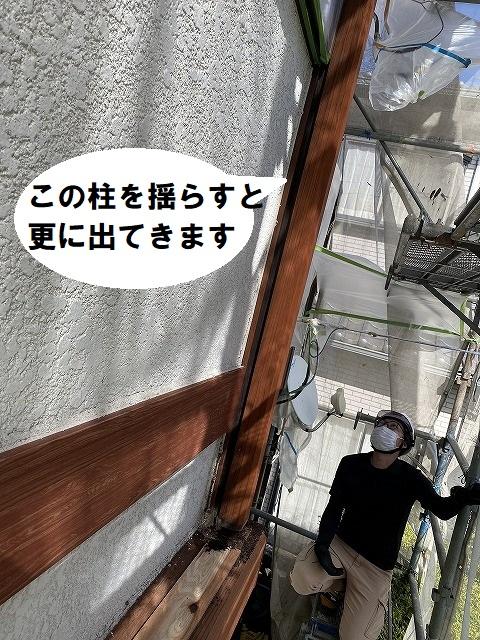 柱を揺らすと、次々にコウモリの糞らしき物が出てくる