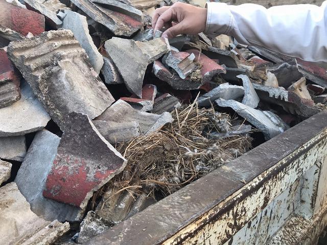 モニエル瓦鳥の巣