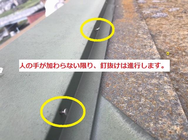 棟板金から釘が複数浮いている