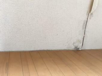 雨漏りにより壁紙が捲れカビも発生