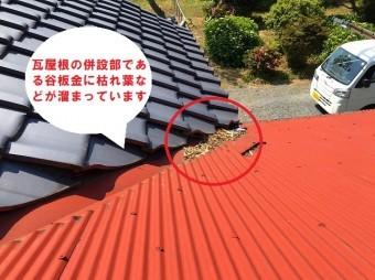水戸市でのトタン屋根葺き替え依頼のお家は母屋に併設するトタン屋根の谷板金に枯れ葉が溜まっています