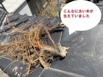 笠間市で化粧棟から木?隅棟から草?で姿を現した木